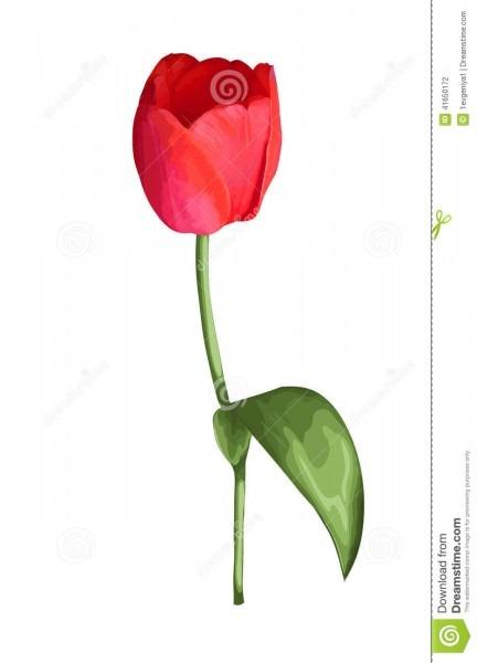 Flor vermelha bonita da tulipa com o efeito de um desenho da