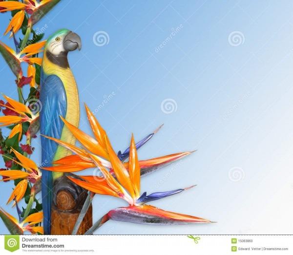 Fundo tropical do convite de luau ilustração stock