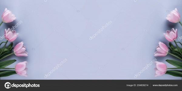 Tulipas cor rosa flores sobre fundo azul claro cartão convite