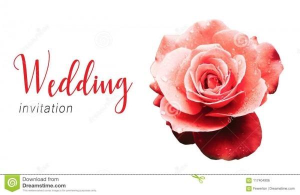 Molde do cartão de texto do convite do casamento e rosa vermelha